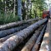 Doljean cercetat pentru tăiere ilegală de arbori și sustragere...