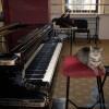 (Video/Foto) O pisică a devenit membră a trupei de artiști a...